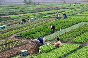 800px-agriculture_in_vietnam_with_farmers